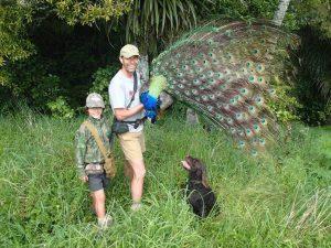 Hunting Peafowl