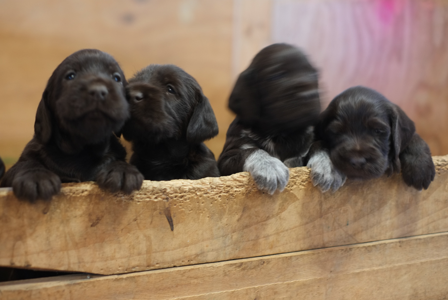 And finally, the reason you're all reading this: puppies!!